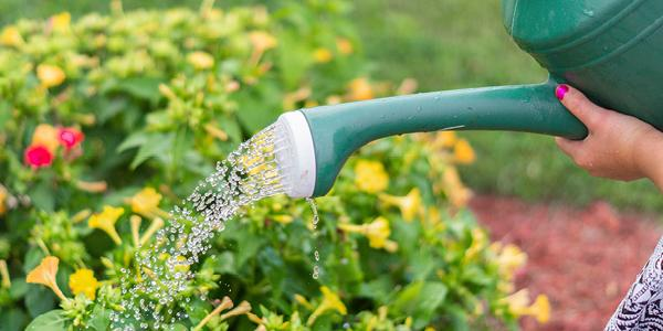Image of Watering Can watering flowers